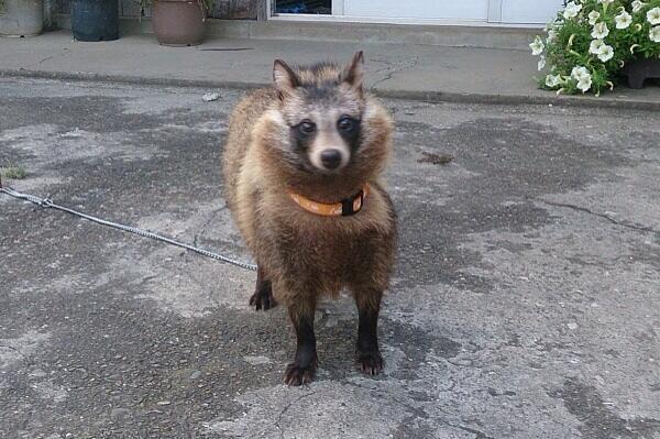 【画像】じいちゃんが山で拾ってきた犬がなんかおかしいwwwwwwww