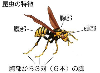 昆虫の起源は火星だった?都市伝説