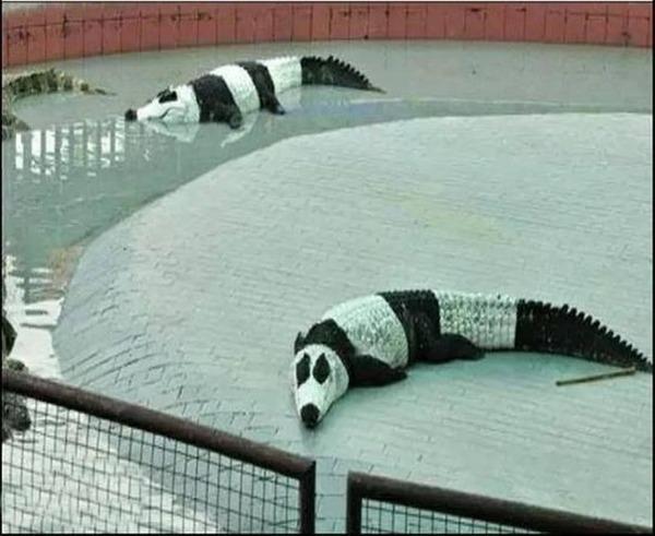 あの凶暴な動物を「パンダ柄」にデコッた強烈な動物が話題に・パンダワニ